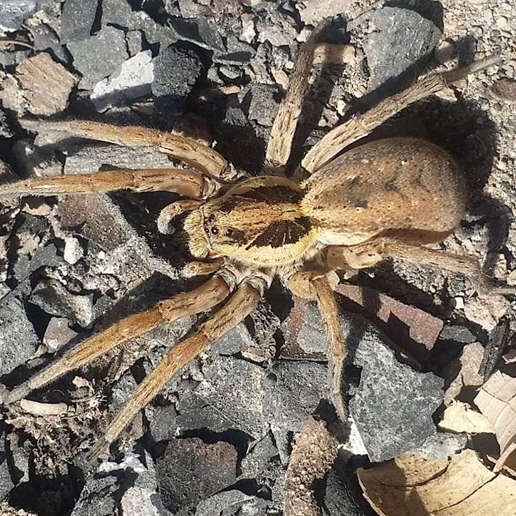 Unbekannte Spinne in Torrevieja gefunden