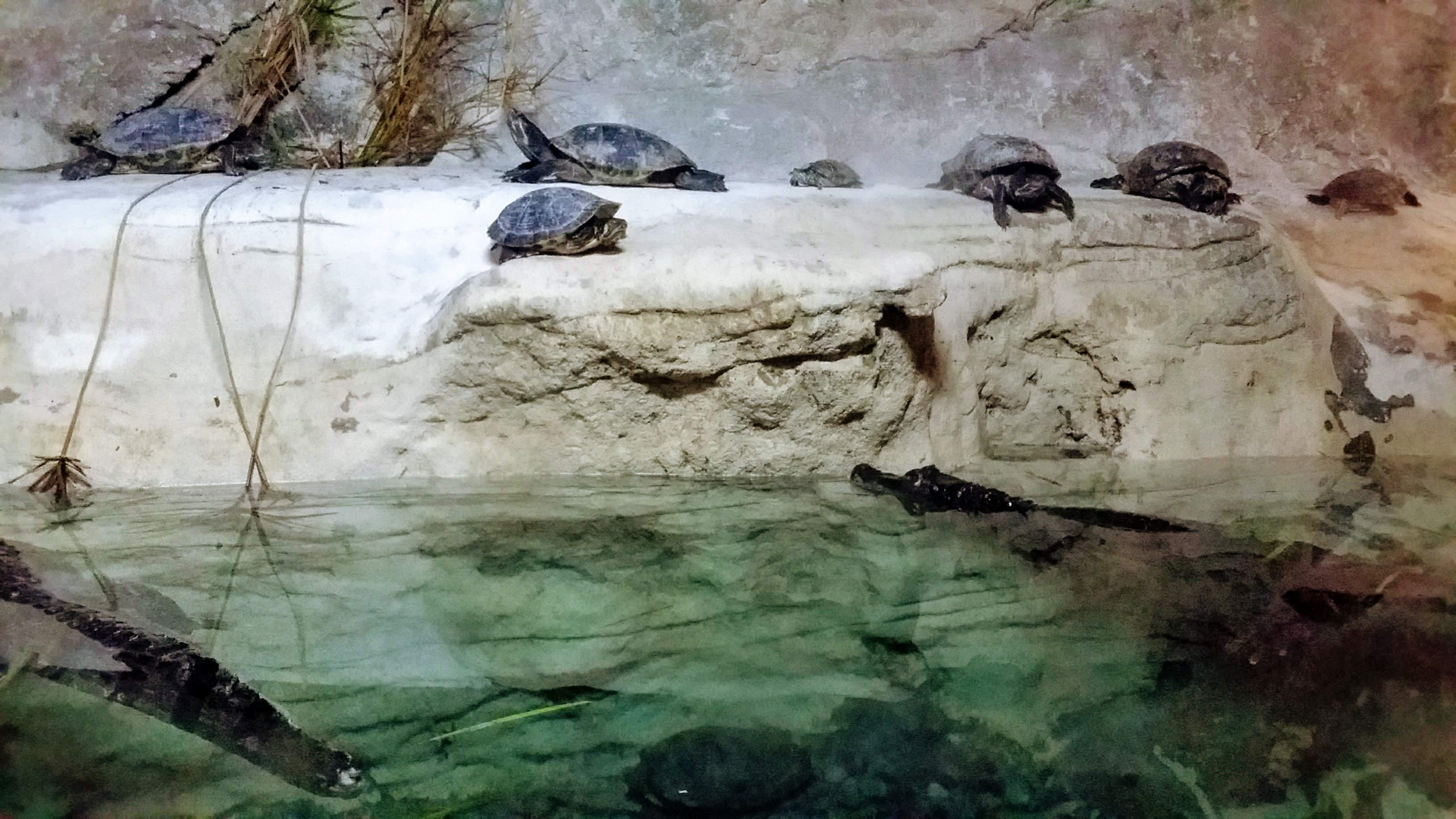 Aligatoren und Schildkröten
