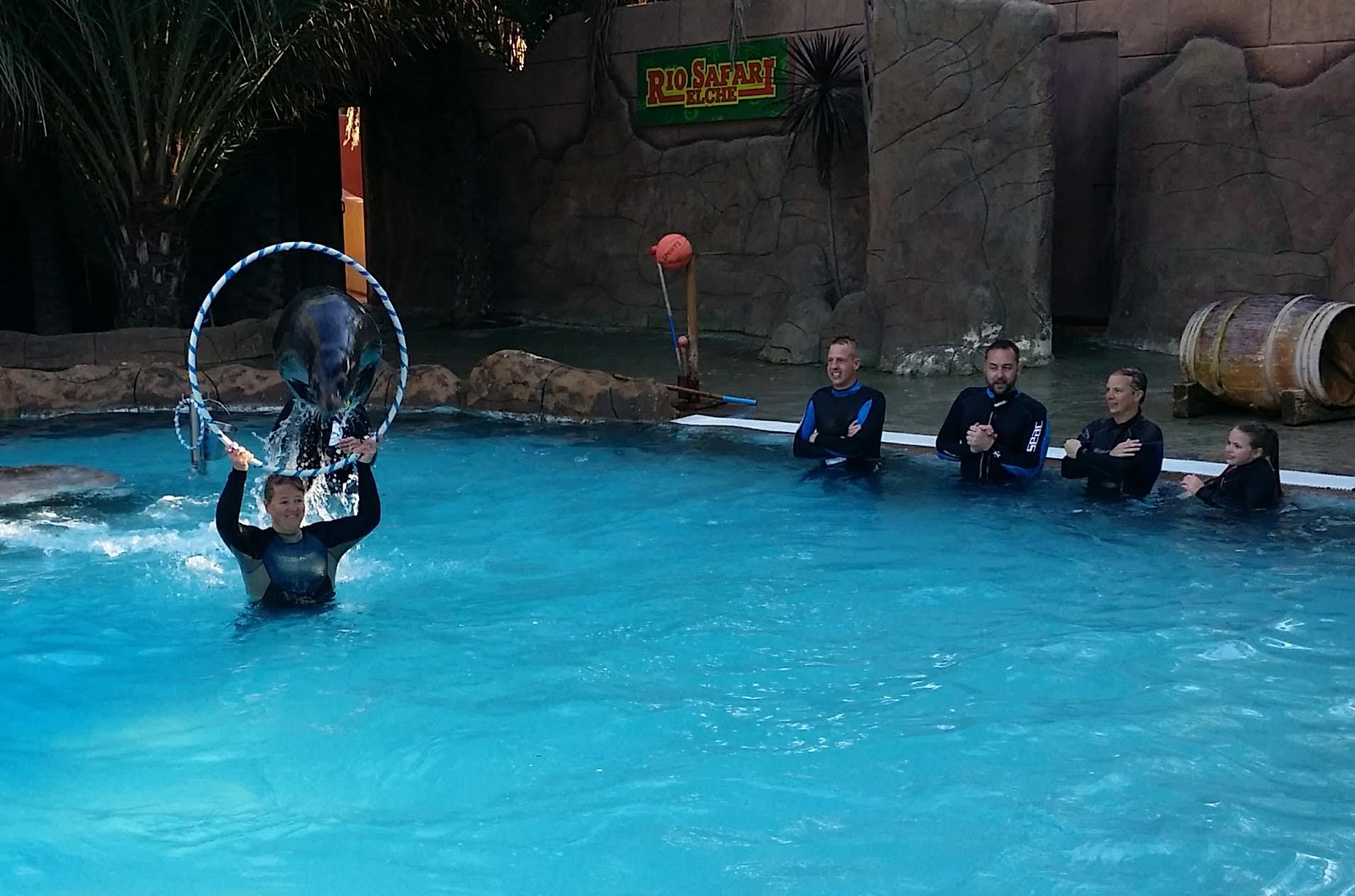Schwimmen mit Seelöwen